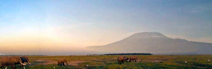 Landschaft und Tiere in Afrika