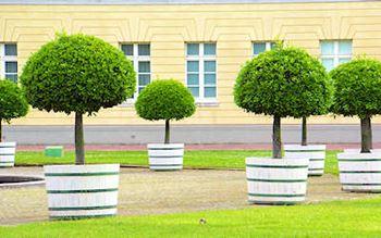 Mobile Bäume vor dem Schloss