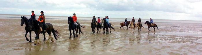 Wattwanderung mit Pferden