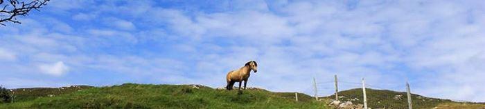 Ruhe, Weite und Pferde in Nordirland