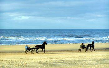Sulkys am Strand